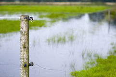 Hight water on the meadow Royalty Free Stock Photos