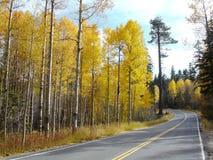 Highway through an aspen forest Stock Photo