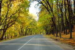 Highway in autumn wood. The highway in autumn woodrn Stock Photos