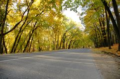 Highway in autumn wood. The highway in autumn wood Stock Photos