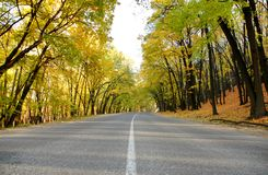 Highway in autumn wood Stock Photo