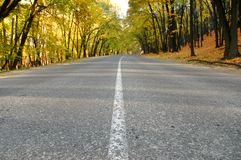 Highway in autumn wood. The highway in autumn woodrn Stock Photography