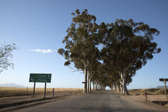 Highway and avenue of Gum trees Stock Photography