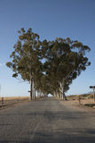 Highway and avenue of Gum trees Stock Images
