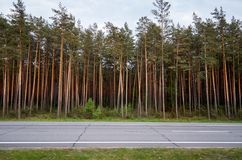 Highway in the background of trees. Coniferous forest. Stock Photography