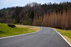 Highway and Chinese fir forest Royalty Free Stock Photo