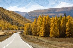 Highway Chuysky Trakt with the truck and yellow autumn forest, Altai Republic Stock Photography