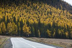 Highway Chuysky Trakt and yellow autumn forest, Altai Republic Stock Image