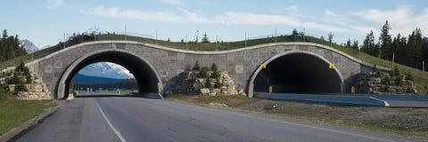 Highway crossing bridge for animals Stock Photos