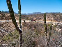 Highway in the desert. With red truck climbing and saguaro cactus. Baja California Mexico Stock Images