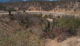 Highway in the desert. With saguaro cactus. Baja California Mexico Stock Image