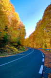 Highway at fall. Highway in the forest in autumn Royalty Free Stock Photo