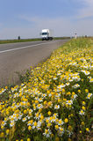 Highway flowers Royalty Free Stock Photos