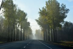 Highway in a foggy morning. Highway in a foggy morning with  forest alongside the road stock photo