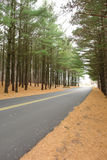 Highway Through a Forest. A view down a straight, modern paved highway passing through a pine forest Stock Images