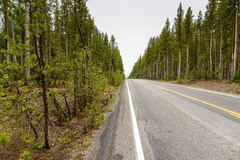 Highway Through a Forest Royalty Free Stock Image