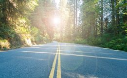 California highway through forest landscape with sunlight background Stock Photo