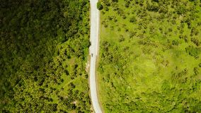Highway among the jungle and palm trees. Highway with a car in the jungle and between palm trees on a tropical island, top view. Summer and travel vacation stock video footage