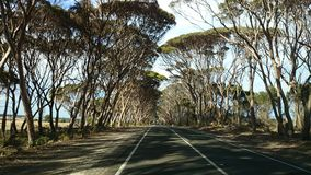 Highway @ Kangaroo Island. Highway on Kangaroo Island, South Australia Royalty Free Stock Photos
