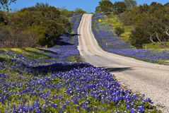 Highway Lined With Flowers. A section of County Road 152 near Llano, Texas that was completely lined with Texas Bluebonnets Stock Images