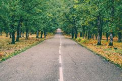 Highway in the Middle of Forest Royalty Free Stock Images