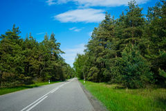 Highway in the middle of green pine trees. Under a bright blue sky Stock Photo