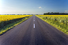 Highway in middle of sunflower field Stock Photography
