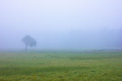 Rural Road in Mist Royalty Free Stock Images