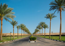 Highway with palm trees in Egypt Stock Photos