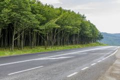 Highway passing near the beech forest in the evening time. Asphalt road running near beech forest with road signs. English translation of Romanian road Caution stock photography
