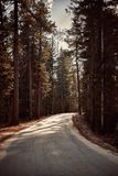 The highway between pine tree forest stock images