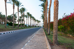 Highway between row of palm trees and flowering shrubs on a summ Stock Image
