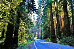 Highway through sequoia forest Stock Image