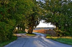 Highway Splits for Tree. A country highway splits allowing a huge maple tree to be preserved Stock Photo