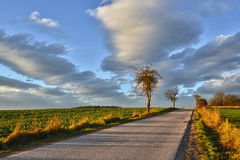 Highway to Heaven. Evening landscape with road and trees under a December sky Royalty Free Stock Image