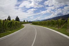 Highway through vineyard Royalty Free Stock Image