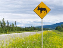 Highway warning roadsign attention moose crossing royalty free stock photo