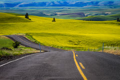 Highway through yellow canola fields in Eastern Washington state. Paved highway passing through canola fields and hills in Palouse region of Washington state Stock Image