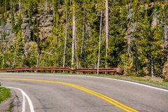 Highway in Yellowstone National Park. Wyoming, USA Royalty Free Stock Photography