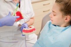 higiena jamy ustnej Dentysta demonstruje zębu szczotkować Obrazy Royalty Free