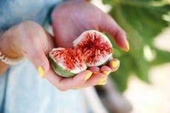 Higo abierto del granjero en las manos de las muchachas Foto de archivo