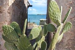 Higo chumbo del cactus Imagen de archivo