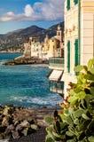 Higo chumbo en una costa costa mediterránea en Camogli, cerca de Génova Fotografía de archivo libre de regalías