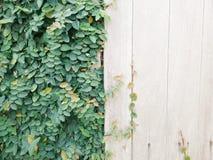 Higo de goma del arrastramiento Imagen de archivo libre de regalías