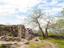 Higos cerca de la fortaleza en la montaña Fotografía de archivo libre de regalías