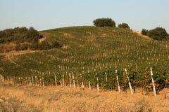 Hij en de wijnmakerijeigenaar waren uit in een wijngaard royalty-vrije stock foto's