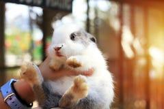 hij Klein konijn maakt vorm rond, werd gedragen omhoog om te voeden stock afbeelding