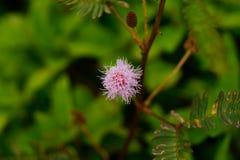Hija tímida de la flor Foto de archivo