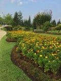 hijau di saujana di taman Immagine Stock