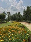 hijau di saujana di taman Fotografia Stock
